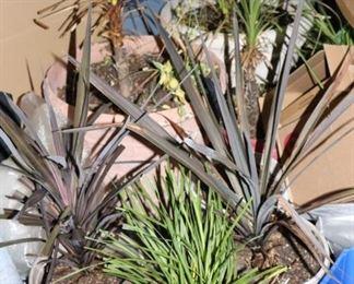Mature House Plants