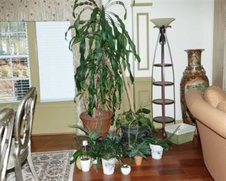 10. Grouping of House Plants