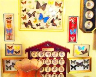 Shadow Boxes of Butterfly  Collections.   7 or 8 cases. Small Hummel Annual Plates in lower and upper right cases.
