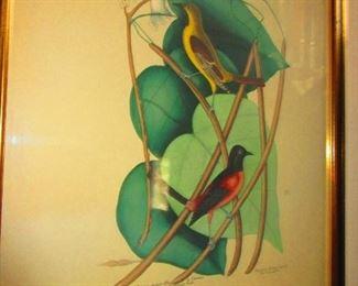 Audubon/ Botanical Hand Colored Print