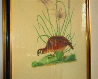 Antique Botanical/ Audubon Hand Colored Print