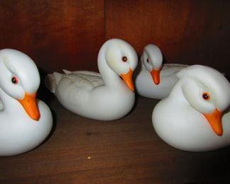 Daphne Kazmar Ducks