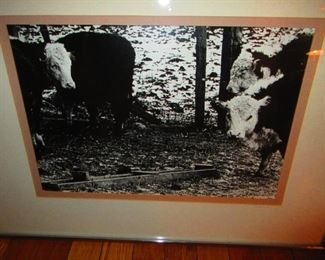 Tekavic - Photo of Cows