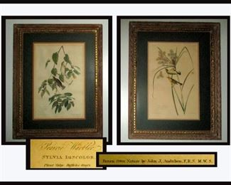Pair of R. Havel Framed Audubon Prints. The Prints have been folded to fit the frames.