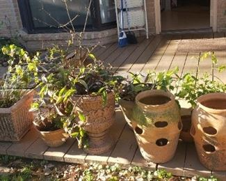 planters and plants for sale