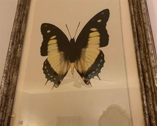 a hand done butterfly, one of a pair