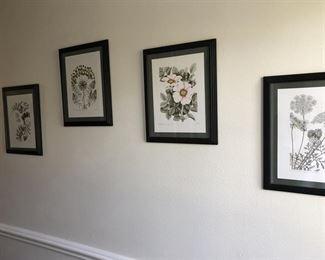 Set of 4 Botanical Prints