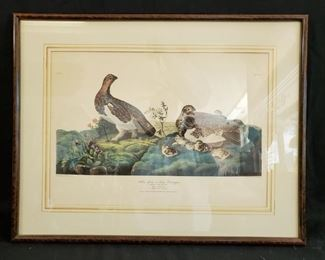 """Framed Willow Grous or Large Ptarmigan plate, 27.5"""" w x 24"""" h - discounted price now $32.50 ***Please note:  California sales tax will be charged on all purchases unless you have a valid California resale certificate on file with us.***"""