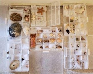 1005: Collection of Seashells Collection of Seashells