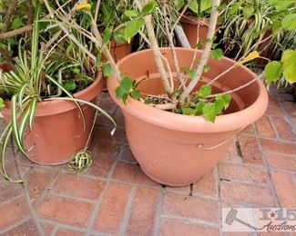 9 Planters with Plants and Anchor
