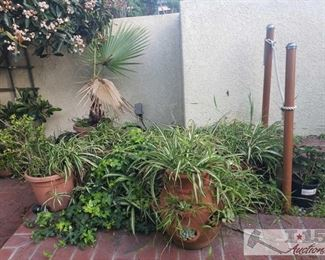 """Approximately 9 Plants and Planters plants planters measure approx 18x10-7""""6"""", tallest plant is 47"""" smallest is 15"""""""