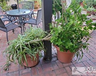 """2 planes and pots measures approx 118x18, 18x119. Tallest plant is 55"""" smallest is 28"""""""