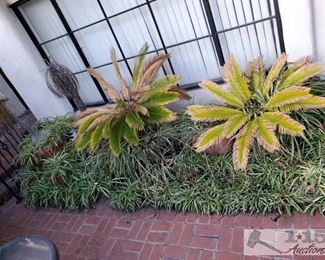 """Approx 12 Planters with Plants > Planters measure approx from 10x11 to 30x19. Tallest plant is 93"""" widest plant measures approx 58"""""""