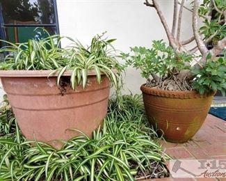 2 Planters - Large and Medium Sized