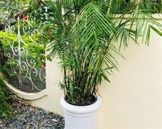 Planter $50