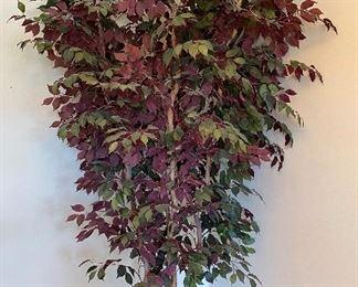 Silk Tree $35