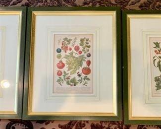 """208. Set of 3 Botanical Fruits (14"""" x 17""""),  $ 240.00"""
