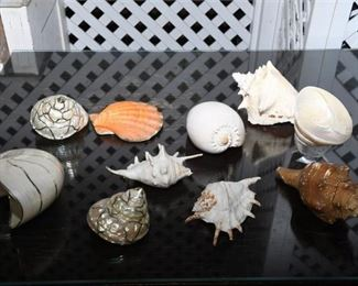 1. Collection of assorted large sea shells