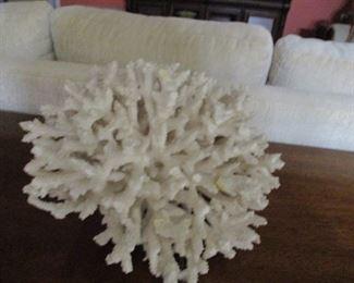 White coral head
