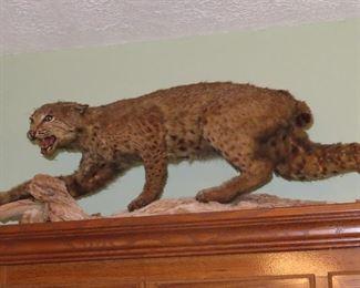Vintage Cougar Mount