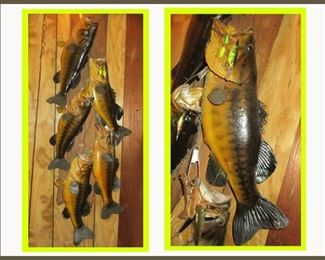 Taxidermy Fish Mount Containing 5 Fish on Driftwood Board