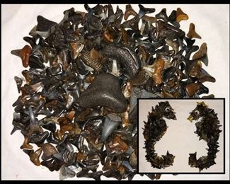 Sharks Teeth and Seahorses Made from Sharks Teeth, (Seahorses not to Scale)