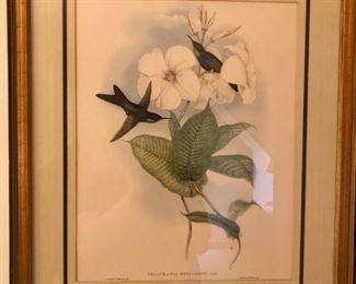 $50 - J.Gould Hummingbird Lithograph Print