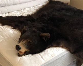 Vintage Authentic Bear Rug