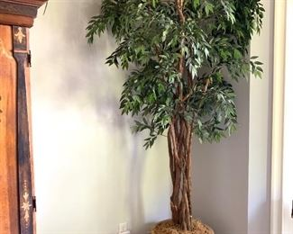 9' tall tree