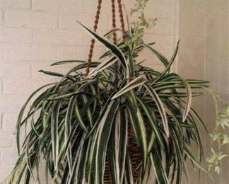 Artificial airplane plant