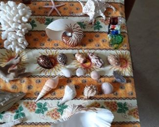 Sea shells, nautilus, coral
