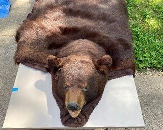 Bear skin rug....