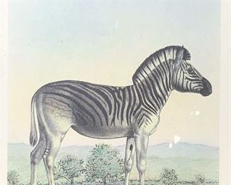 Mixed Media Illustration of Zebra