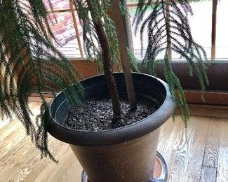Detail indoor plant