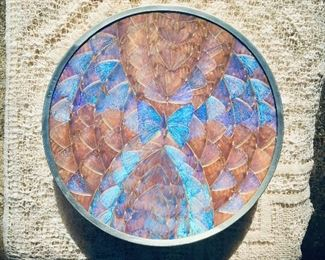 $50  Iridescent Butterfly wing plate