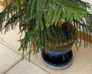 20% off of $29 Pine in blue planter