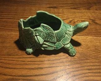 McCoy turtle