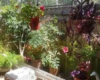 Great selection of potted plants