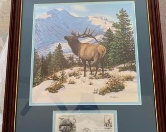 Various Wildlife Picture Set