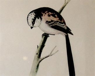Engraving of a bird..the long tailed tit. Professionally framed and matted thin wood frame with glass  13x10 1/4     $35