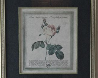 "Double Framed w/4"" Mat (24""x 26"" Botanical Rose Print"