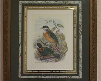 "Robert Grace Studio ""Aelurcedus  Stonii"" Framed and Matted Print (19.5"" x 22.5"")"