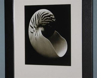 """Nautilus Seashell Black Matted and. Framed Print (22 1/4"""" x 27 1/4"""")"""