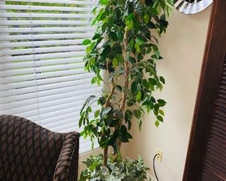 "$60 FICUS TREE 70""HEIGHT"