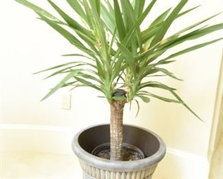 Plant #1  $30