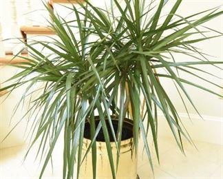 Plant #2   $30
