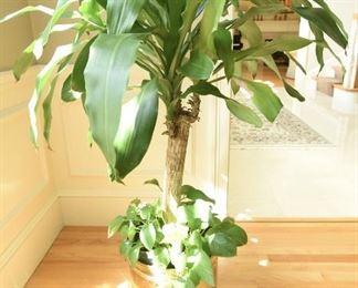 Plant #3  $30