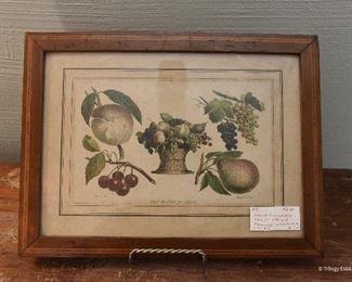 Fruit Botanical Print $12 Approximately 5x7