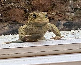 Sorry no Lot number.  Just Fred the  friendly frog checking out the estate sale from the window well.  Priceless...