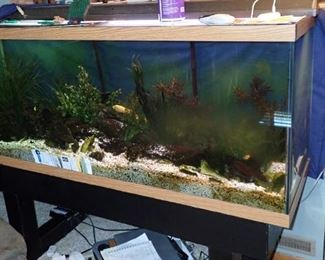 100 GALLON FISH TANK WITH THE FISH - WILL NEED TO MAKE ARRANGEMENTS FOR EMPTYING AND MOVING FISH